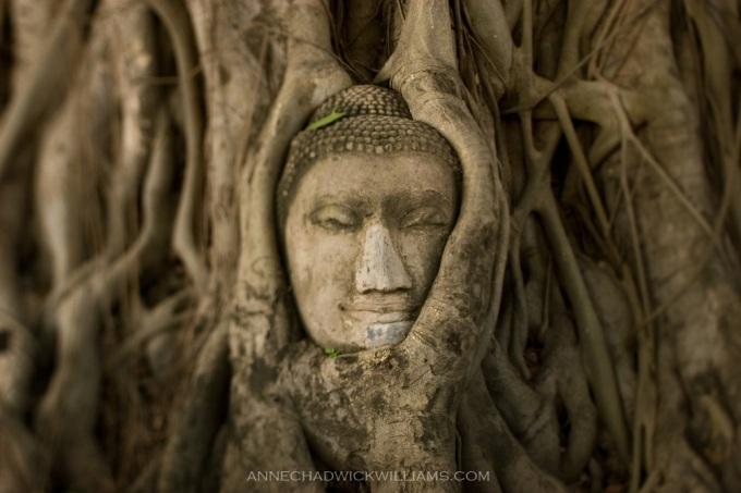 ayutthaya-buddha-head
