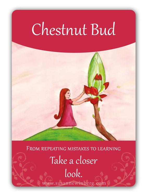 bach-kaart-chestnut-bud