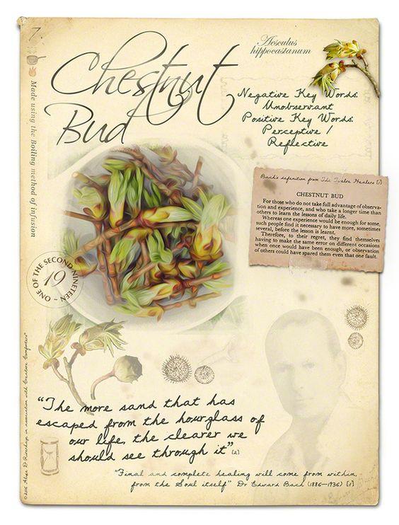 chestnut-bud-retro
